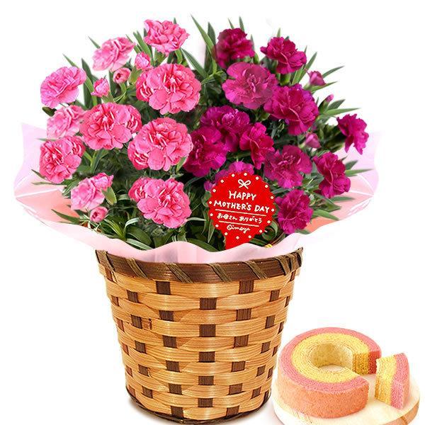 母の日 ギフト 花 母の日 プレゼント カーネーション 鉢植え 花鉢 花とスイーツ 2020 ギフトランキング お菓子|oimoya|23