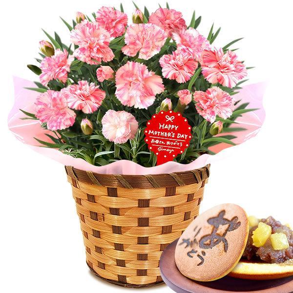 母の日 ギフト 花 母の日 プレゼント カーネーション 鉢植え 花鉢 お菓子 スイーツ 2020 ギフトランキング 5号鉢 oimoya 33