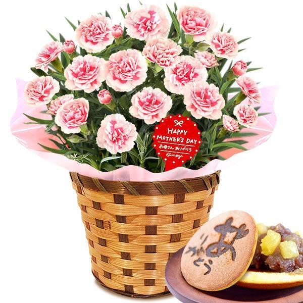 母の日 ギフト 花 母の日 プレゼント カーネーション 鉢植え 花鉢 お菓子 スイーツ 2020 ギフトランキング 5号鉢 oimoya 27