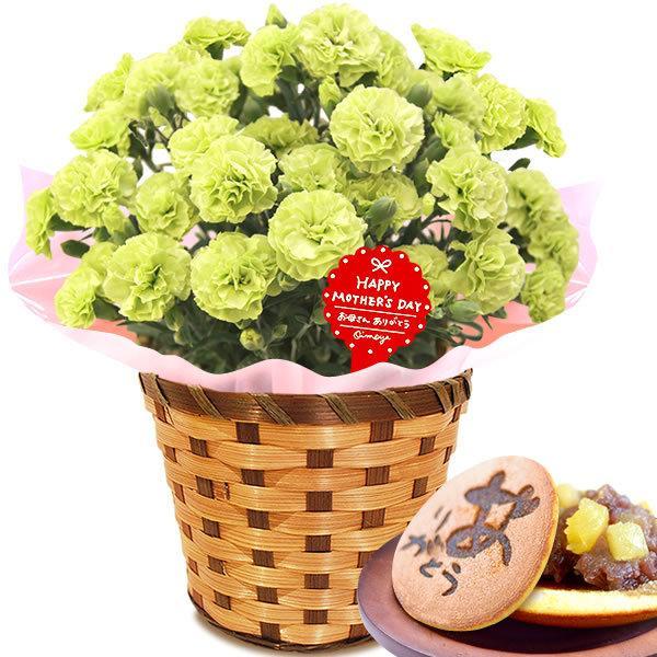 母の日 ギフト 花 母の日 プレゼント カーネーション 鉢植え 花鉢 お菓子 スイーツ 2020 ギフトランキング 5号鉢 oimoya 25