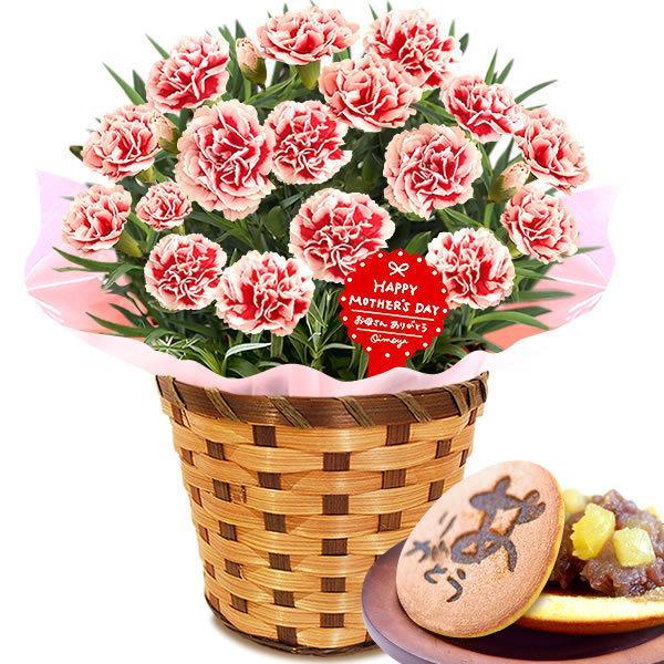 母の日 ギフト 花 母の日 プレゼント カーネーション 鉢植え 花鉢 お菓子 スイーツ 2020 ギフトランキング 5号鉢 oimoya 28