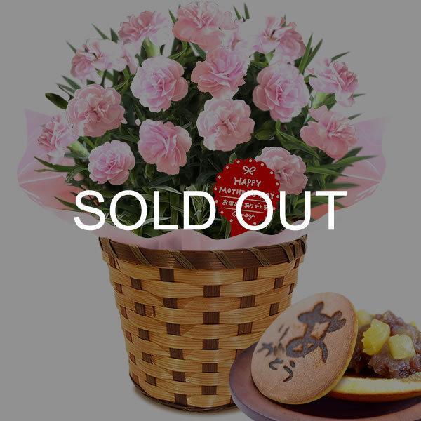 母の日 ギフト 花 母の日 プレゼント カーネーション 鉢植え 花鉢 お菓子 スイーツ 2020 ギフトランキング 5号鉢 oimoya 39