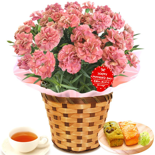 母の日 花 ギフト 母の日プレゼント スイーツ 2019 mothersday カーネーション 鉢植え お菓子|oimoya|18