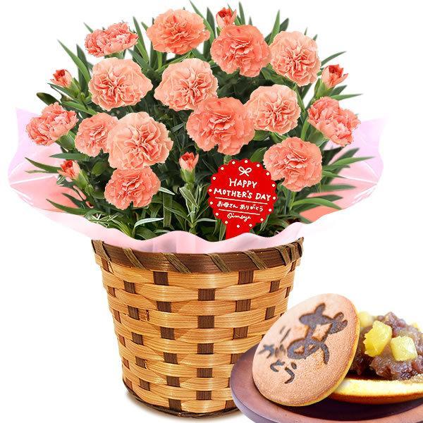 母の日 ギフト 花 母の日 プレゼント カーネーション 鉢植え 花鉢 お菓子 スイーツ 2020 ギフトランキング 5号鉢 oimoya 22