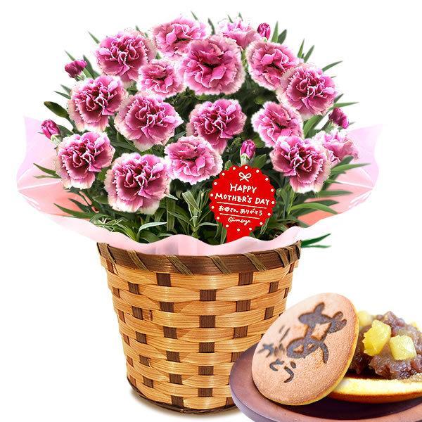 母の日 ギフト 花 母の日 プレゼント カーネーション 鉢植え 花鉢 お菓子 スイーツ 2020 ギフトランキング 5号鉢 oimoya 26