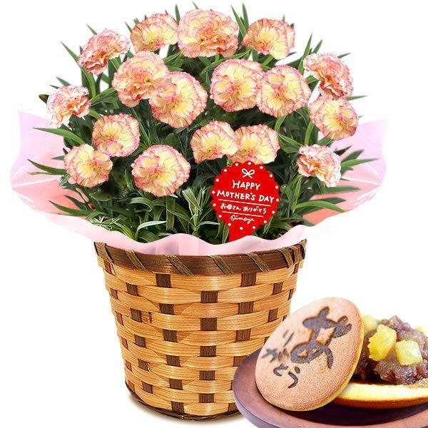母の日 ギフト 花 母の日 プレゼント カーネーション 鉢植え 花鉢 お菓子 スイーツ 2020 ギフトランキング 5号鉢 oimoya 32