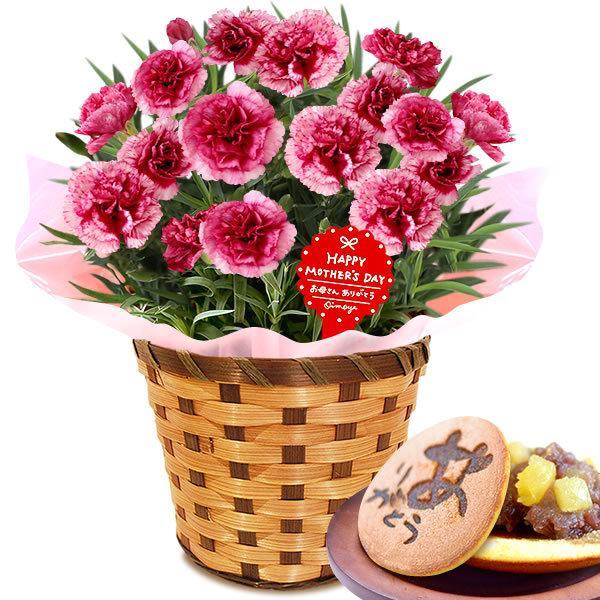 母の日 ギフト 花 母の日 プレゼント カーネーション 鉢植え 花鉢 お菓子 スイーツ 2020 ギフトランキング 5号鉢 oimoya 35