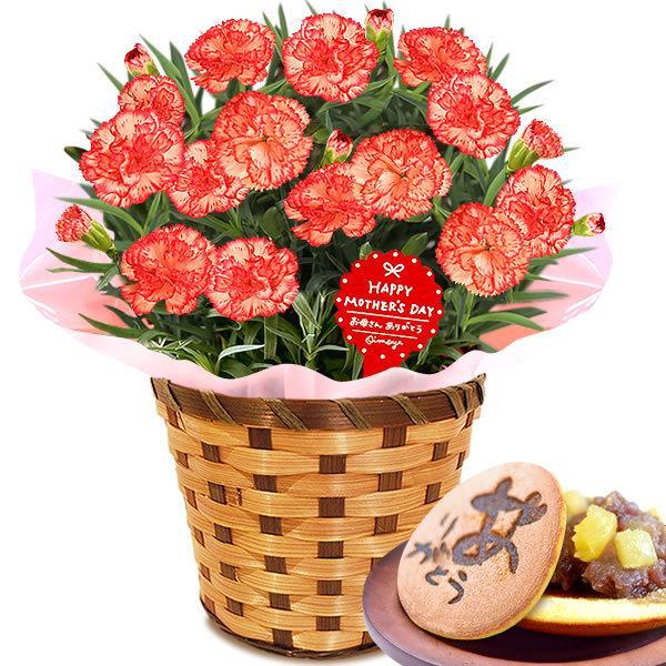 母の日 ギフト 花 母の日 プレゼント カーネーション 鉢植え 花鉢 お菓子 スイーツ 2020 ギフトランキング 5号鉢 oimoya 29