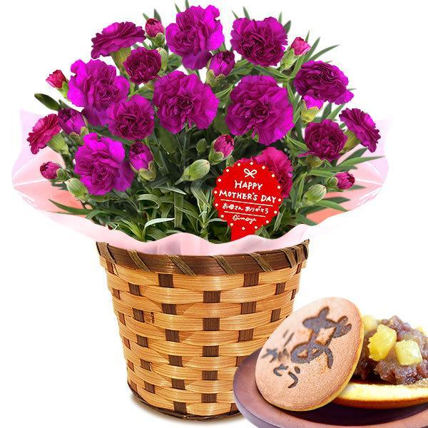 母の日 ギフト 花 母の日 プレゼント カーネーション 鉢植え 花鉢 お菓子 スイーツ 2020 ギフトランキング 5号鉢 oimoya 24