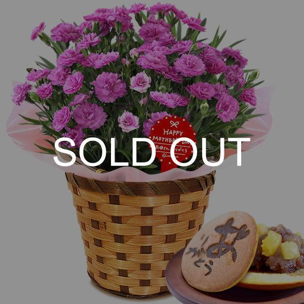 母の日 ギフト 花 母の日 プレゼント カーネーション 鉢植え 花鉢 お菓子 スイーツ 2020 ギフトランキング 5号鉢 oimoya 38
