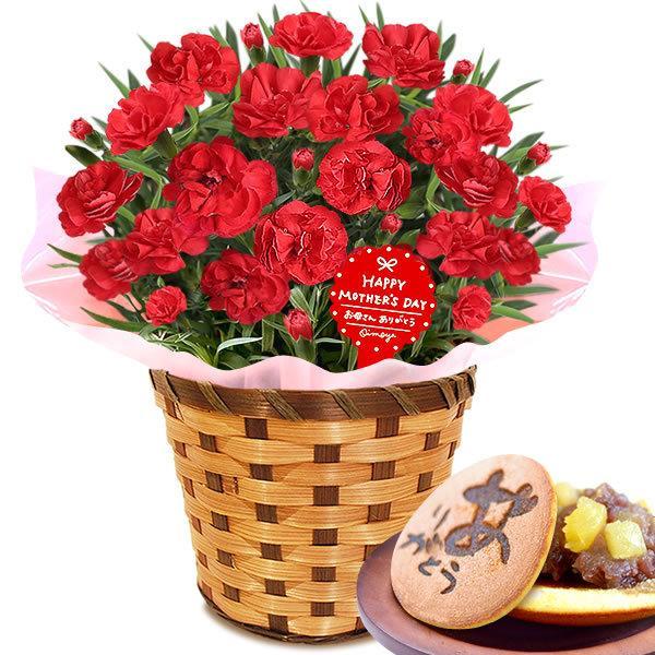 母の日 ギフト 花 母の日 プレゼント カーネーション 鉢植え 花鉢 お菓子 スイーツ 2020 ギフトランキング 5号鉢 oimoya 20