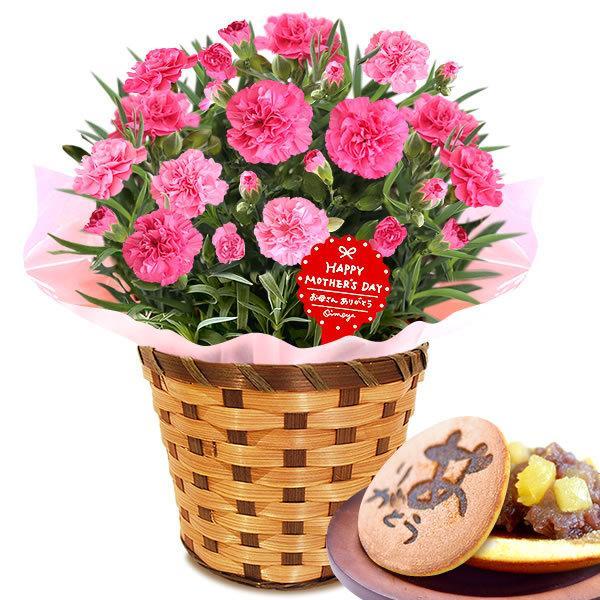 母の日 ギフト 花 母の日 プレゼント カーネーション 鉢植え 花鉢 お菓子 スイーツ 2020 ギフトランキング 5号鉢 oimoya 34