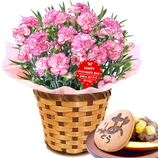母の日 ギフト 花 母の日 プレゼント カーネーション 鉢植え 花鉢 お菓子 スイーツ 2020 ギフトランキング 5号鉢 oimoya 30
