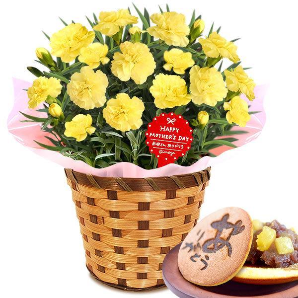 母の日 ギフト 花 母の日 プレゼント カーネーション 鉢植え 花鉢 お菓子 スイーツ 2020 ギフトランキング 5号鉢 oimoya 23