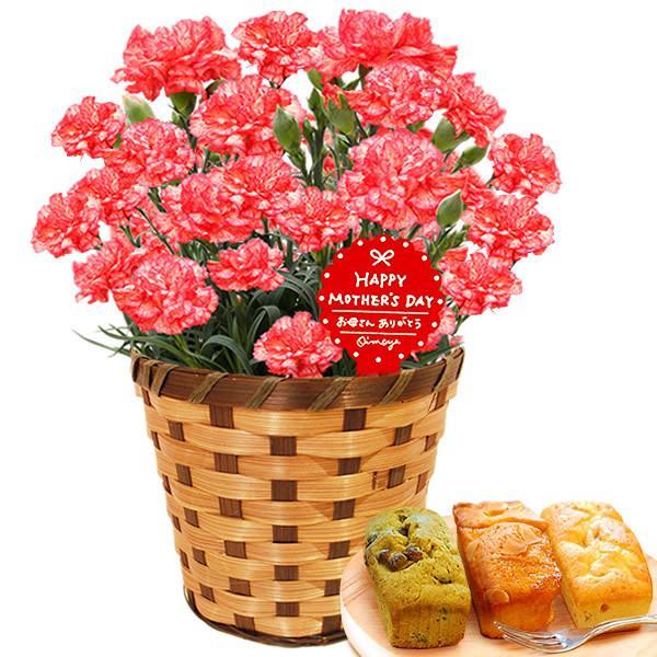 母の日 花 ギフト 母の日プレゼント 2019 mothersday 鉢植え スイーツ カーネーション以外 oimoya 20