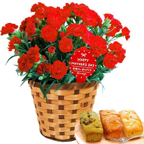 母の日 花 ギフト 母の日プレゼント 2019 mothersday 鉢植え スイーツ カーネーション以外 oimoya 18