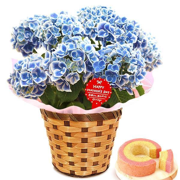 母の日 ギフト 母の日プレゼント ランキング mothersday 2019 花 鉢植え 花 スイーツ|oimoya|19