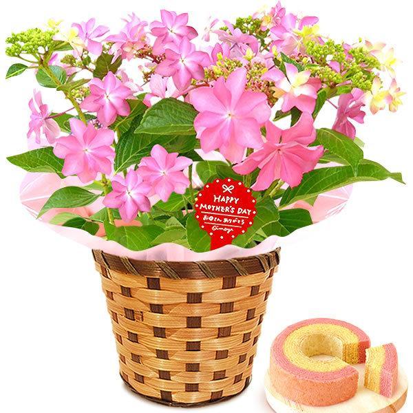 母の日 ギフト 母の日プレゼント ランキング mothersday 2019 花 鉢植え 花 スイーツ|oimoya|18