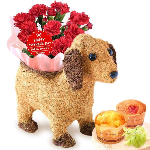 母の日 ギフト 花 母の日 カーネーション プレゼント 花とスイーツ 2020 ギフトランキング 鉢植え お菓子|oimoya|25