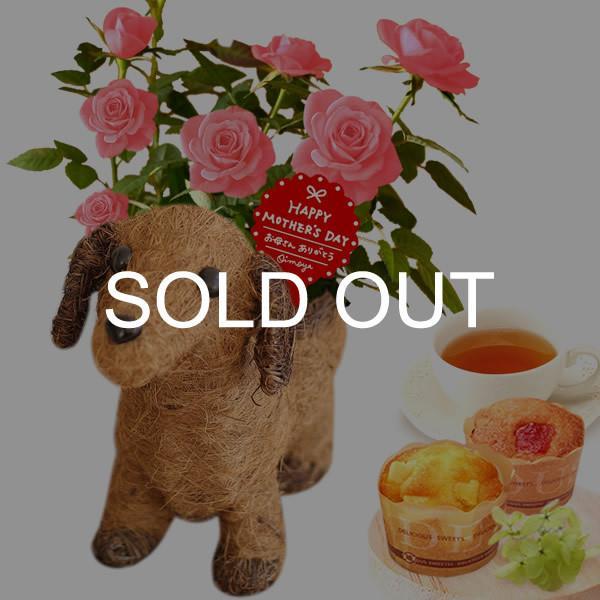 母の日 ギフト 花 母の日 カーネーション プレゼント 花とスイーツ 2020 ギフトランキング 鉢植え お菓子|oimoya|30