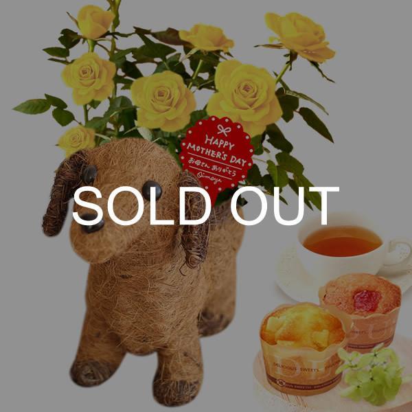 母の日 ギフト 花 母の日 カーネーション プレゼント 花とスイーツ 2020 ギフトランキング 鉢植え お菓子|oimoya|31