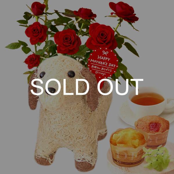 母の日 ギフト 花 母の日 カーネーション プレゼント 花とスイーツ 2020 ギフトランキング 鉢植え お菓子|oimoya|32