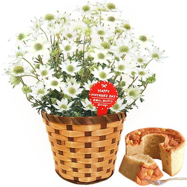 母の日 ギフト 母の日プレゼント ランキング mothersday 2019 花 鉢植え 花 スイーツ|oimoya|27