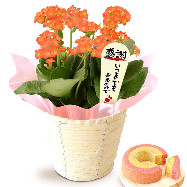 母の日 花 ギフト 母の日プレゼント 2019 ランキング mothersday 鉢植え スイーツ カーネーション以外|oimoya|21
