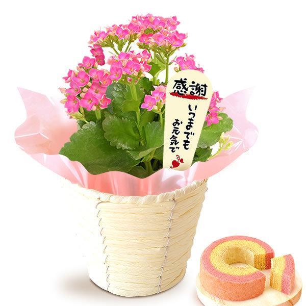 母の日 花 ギフト 母の日プレゼント 2019 ランキング mothersday 鉢植え スイーツ カーネーション以外|oimoya|20