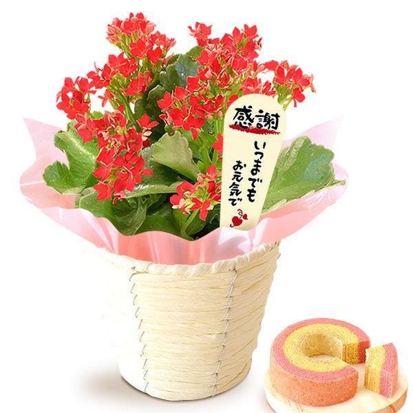 母の日 花 ギフト 母の日プレゼント 2019 ランキング mothersday 鉢植え スイーツ カーネーション以外|oimoya|19
