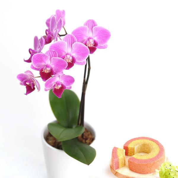 敬老の日 プレゼント 花 選べる胡蝶蘭 鉢植え 敬老の日ギフト スイーツ|oimoya|13