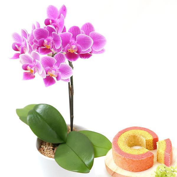敬老の日 プレゼント 花 選べる胡蝶蘭 鉢植え 敬老の日ギフト スイーツ|oimoya|14