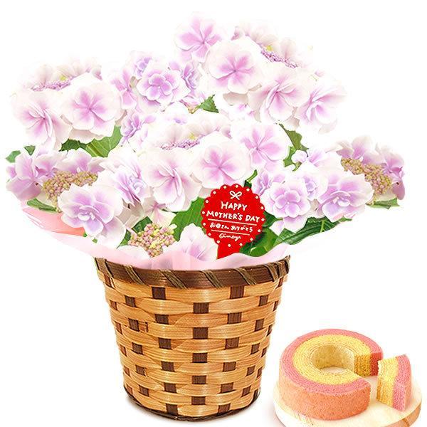 母の日 ギフト 母の日プレゼント ランキング mothersday 2019 花 鉢植え 花 スイーツ|oimoya|16