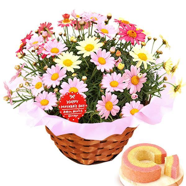 母の日 ギフト 母の日プレゼント ランキング mothersday 2019 花 鉢植え 花 スイーツ|oimoya|15