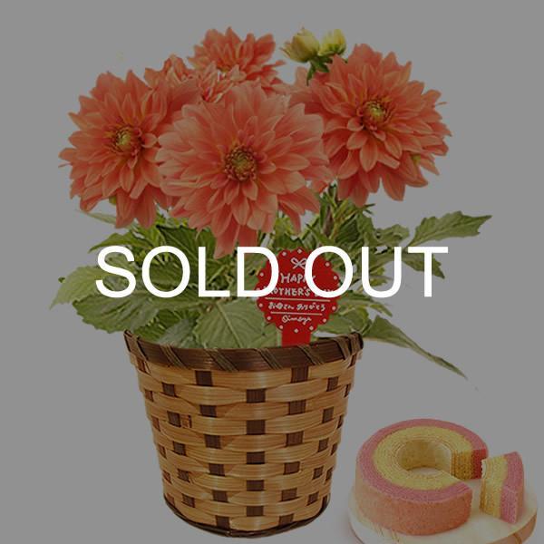 母の日 ギフト 花 母の日 プレゼント 花とスイーツ 2020 ギフトランキング 紫陽花 アジサイ バラ 鉢植え お菓子|oimoya|24