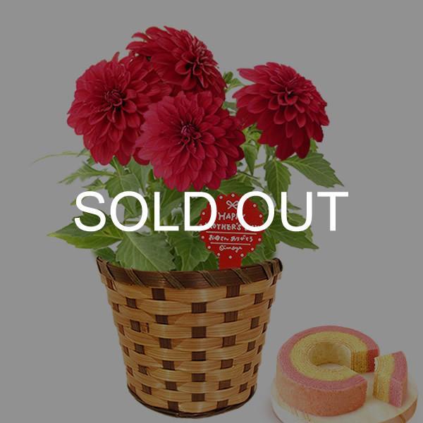 母の日 ギフト 花 母の日 プレゼント 花とスイーツ 2020 ギフトランキング 紫陽花 アジサイ バラ 鉢植え お菓子|oimoya|23