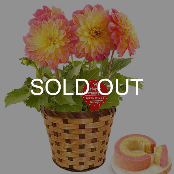 母の日 ギフト 花 母の日 プレゼント 花とスイーツ 2020 ギフトランキング 紫陽花 アジサイ バラ 鉢植え お菓子|oimoya|25