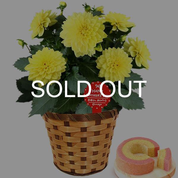 母の日 ギフト 母の日プレゼント ランキング mothersday 2019 花 鉢植え 花 スイーツ|oimoya|24