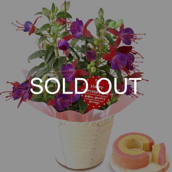 母の日 花 ギフト 母の日プレゼント 2019 ランキング mothersday 鉢植え スイーツ カーネーション以外|oimoya|22