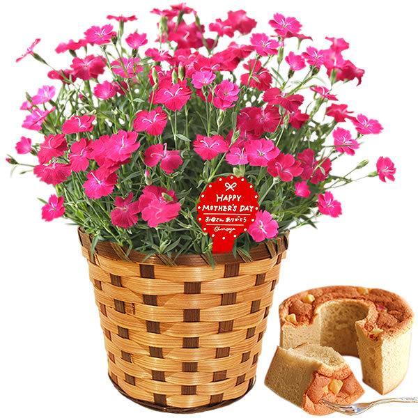 母の日 ギフト 母の日プレゼント ランキング mothersday 2019 花 鉢植え 花 スイーツ|oimoya|29