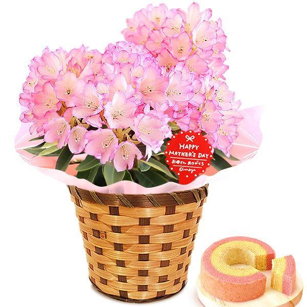 母の日 ギフト 母の日プレゼント ランキング mothersday 2019 花 鉢植え 花 スイーツ|oimoya|28
