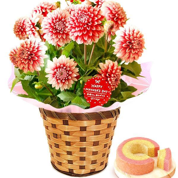 母の日 ギフト 母の日プレゼント ランキング mothersday 2019 花 鉢植え 花 スイーツ|oimoya|20