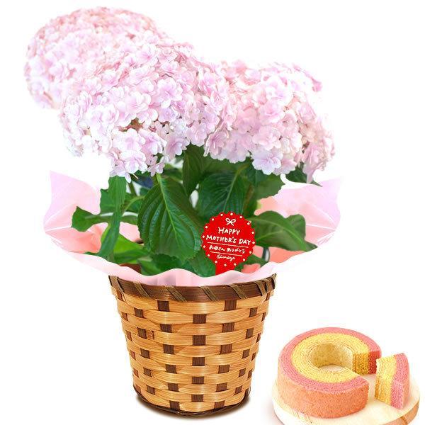 母の日 花 ギフト 母の日プレゼント 2019 mothersday 鉢植え スイーツ カーネーション以外|oimoya|16