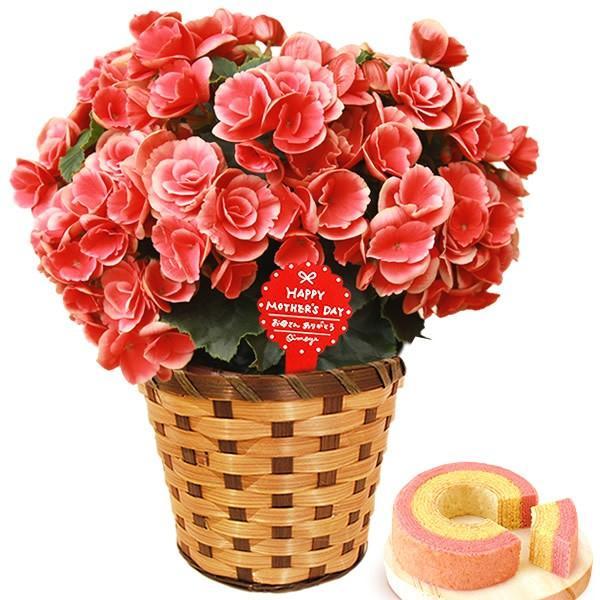 母の日 ギフト 花 母の日 プレゼント 花とスイーツ 2020 ギフトランキング 紫陽花 アジサイ バラ 鉢植え お菓子|oimoya|12
