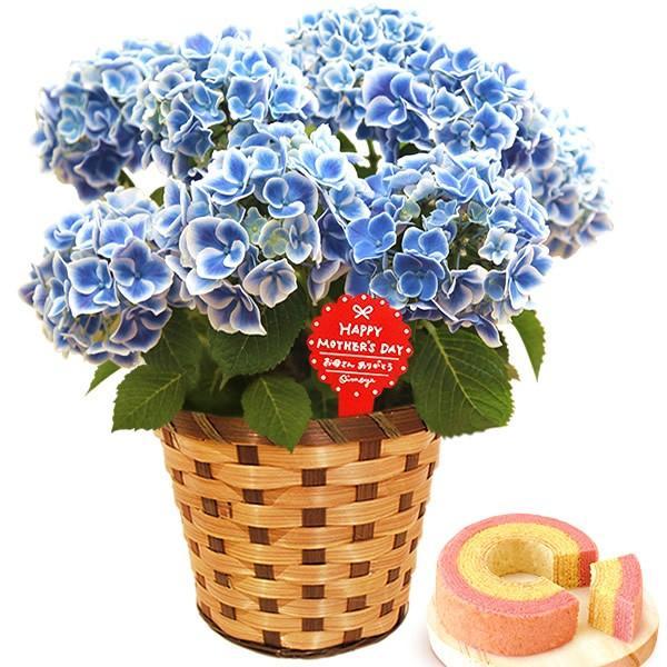 母の日 ギフト 花 母の日 プレゼント 花とスイーツ 2020 ギフトランキング 紫陽花 アジサイ バラ 鉢植え お菓子|oimoya|17