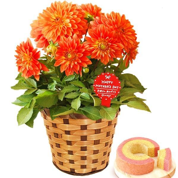 母の日 ギフト 花 母の日 プレゼント 花とスイーツ 2020 ギフトランキング 紫陽花 アジサイ バラ 鉢植え お菓子|oimoya|19
