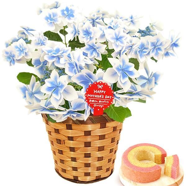 母の日 ギフト 花 母の日 プレゼント 花とスイーツ 2020 ギフトランキング 紫陽花 アジサイ バラ 鉢植え お菓子|oimoya|15