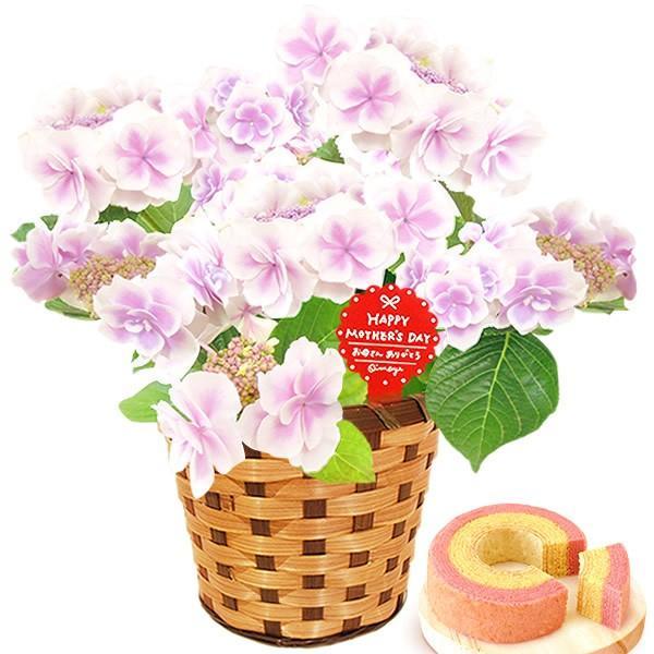 母の日 ギフト 花 母の日 プレゼント 花とスイーツ 2020 ギフトランキング 紫陽花 アジサイ バラ 鉢植え お菓子|oimoya|14