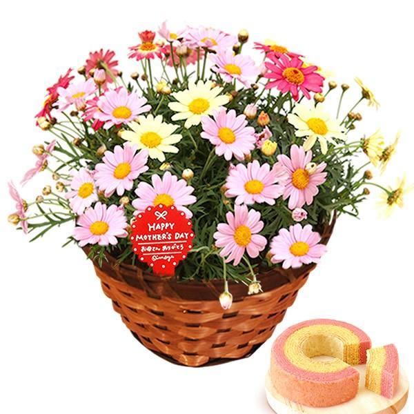 母の日 ギフト 花 母の日 プレゼント 花とスイーツ 2020 ギフトランキング 紫陽花 アジサイ バラ 鉢植え お菓子|oimoya|13