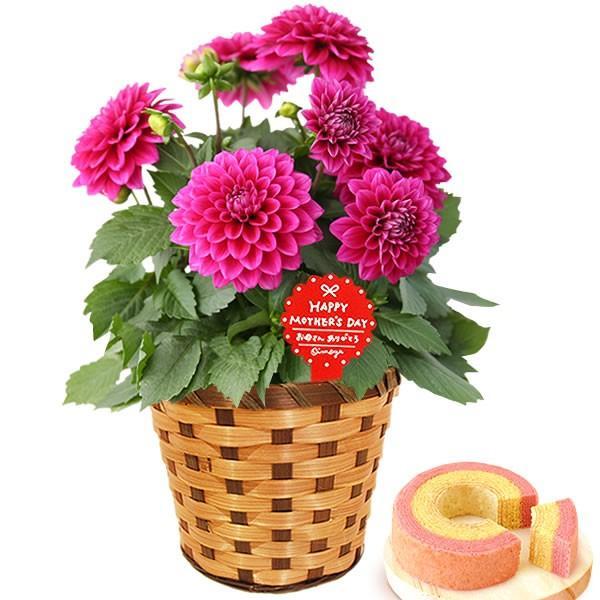 母の日 ギフト 花 母の日 プレゼント 花とスイーツ 2020 ギフトランキング 紫陽花 アジサイ バラ 鉢植え お菓子|oimoya|21